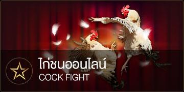 ไก่ชนออนไลน์ ufabet แทงไก่ออนไลน์ cockfight